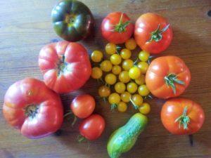 Regional und Saisonal - Nachhaltiges Essen, bio, Regionalität, Saisonaliät